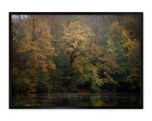 Efterårets farver i naturen - træerne.