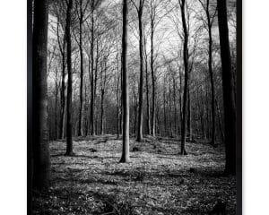 Skoven oser af forår og når solstrålerne laver deres imellem træerne så er det et fantastisk sted at befinde sig. Har med dette billede arbejdet mere hen imod en kunstnerisk visning.