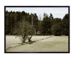 Fotografiet af træet er blevet efterbehandlet som et oliemaleri.