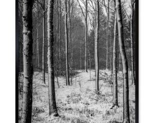 At bevæge sig rundt i en snedækket skov er en magisk oplevelse.
