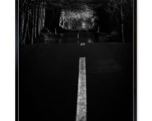Jeg fotograferede billedet på en biltur igennem skoven lyset og skyggerne samspillede på en helt særlig måde. Det at knæle ned på vejen gjorde blot billedet endnu mere gribende.