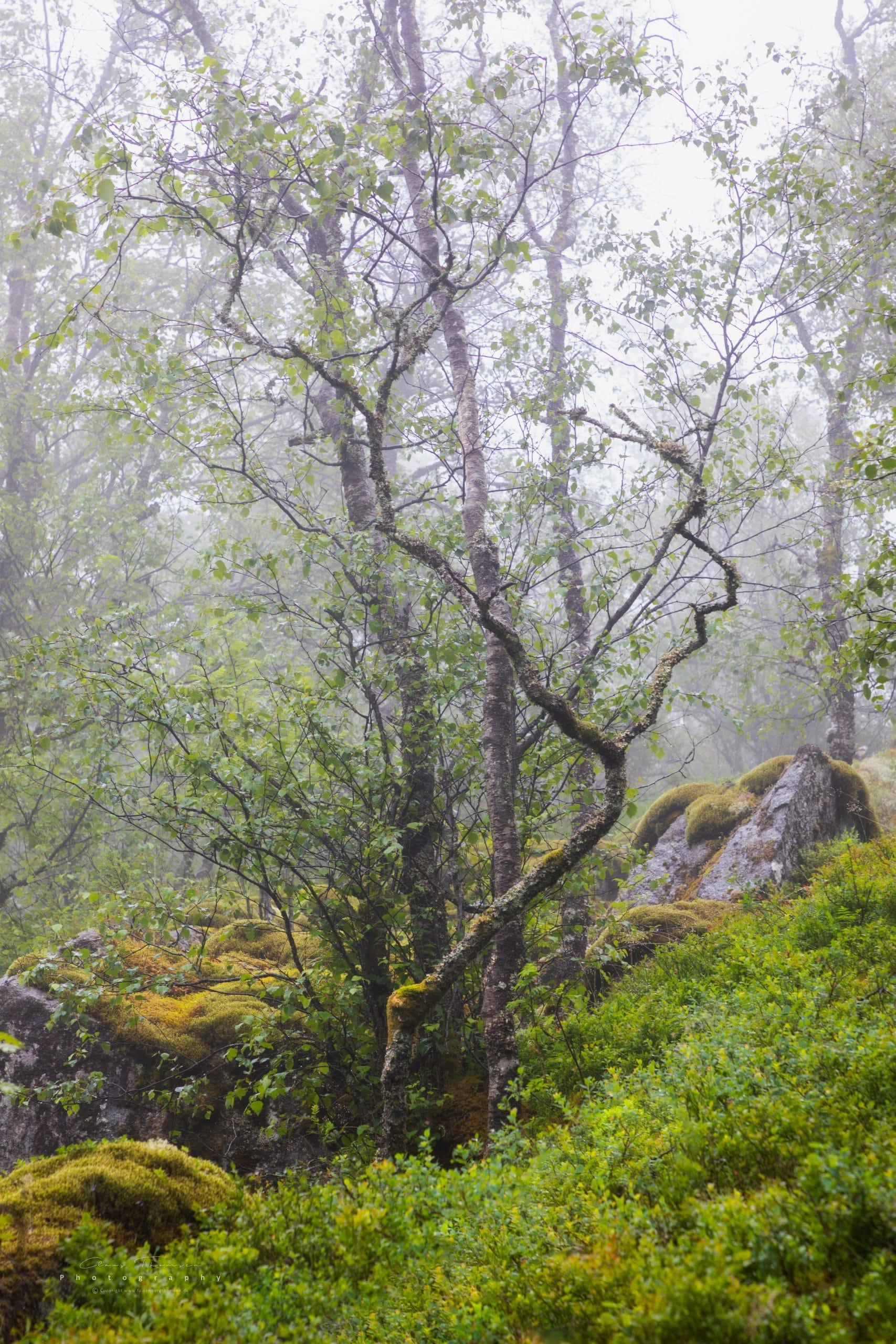 Landskabsfotografi fra naturen i Norge.